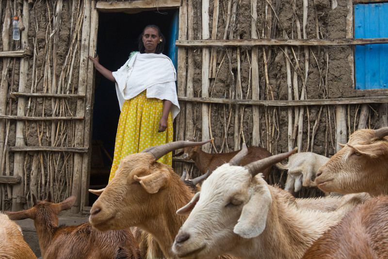 A woman stands with her livestock, Ethiopia