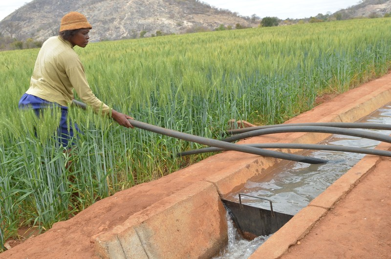Ipaishe preparing to water her crop of wheat. Photo: Annie Bungeroth/Oxfam