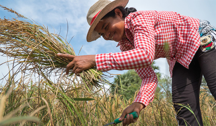 Oxfam partner RACHANA works in Takeo province, Cambodia, to improve the livelihoods of smallholder farmers and their families. They train and equip them to better cope with climate change and natural disasters such as floods and droughts. Kimlong Meng/ Ox
