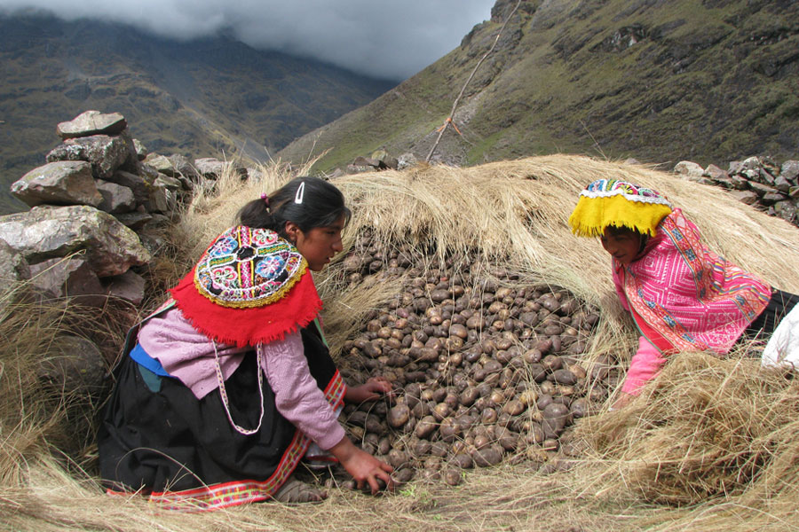 mountain potatoes peru