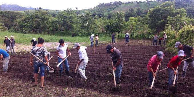 Parcelas comunitarias de cultivo son trabajadas por miembros de las comunidades de Honduras para contrarrestar los efectos de la sequía. Foto Carlos Rosales - Oxfam