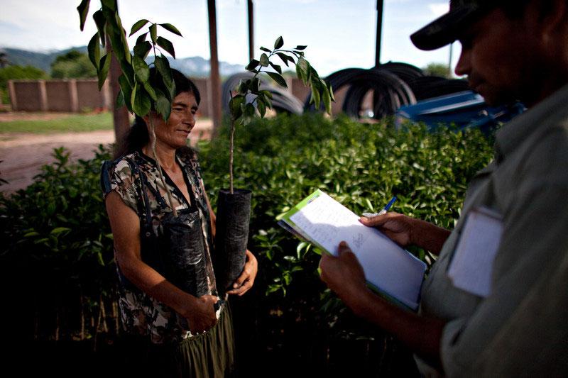 Un técnico entrega plantines de cacao a una campesina. Foto: Oxfam / Patricio Crooker