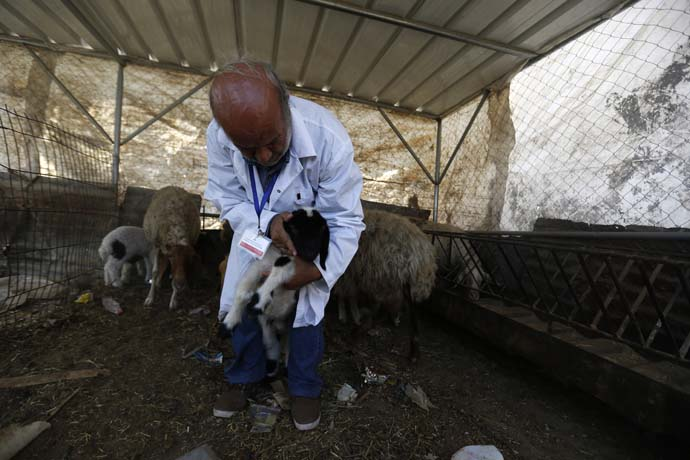 Ismail Abedrabo, a vet working with Oxfam partner UAWC, in Gaza, with sheep