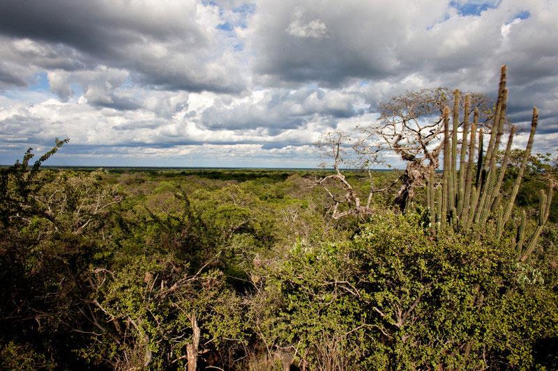 Paisaje del Chaco Boliviano donde impulsamos sistemas agroforestales, una novedosa forma de producción que replica –a escala- la vida del bosque. Foto: Oxfam/ Patricio Crooker