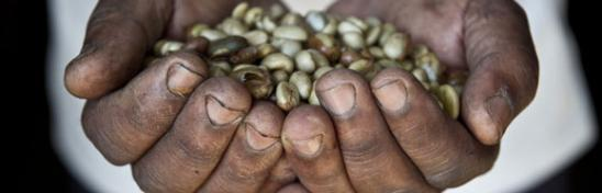 Hands full of seeds - Financing for Development Conference. Photo: Oxfam