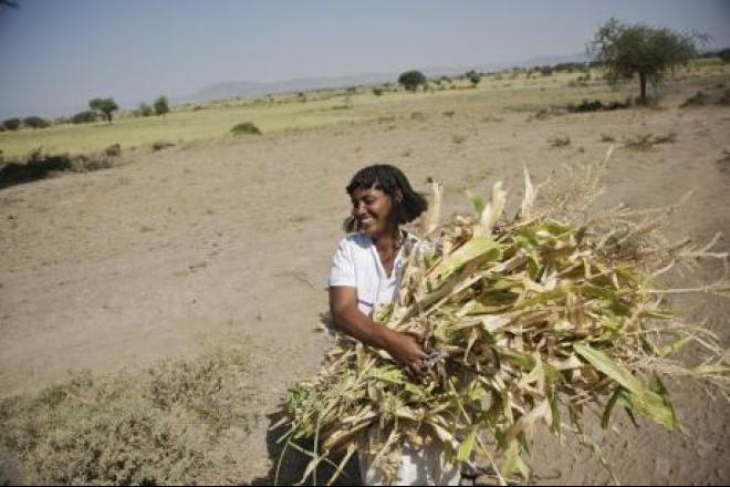 Leake Borana cargando maiz del campo a su casa. Foto: Aubrey Wade/Oxfam