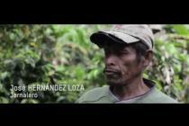 Impacto de la roya del café en Nicaragua