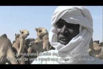 Crise alimentaire au Sahel : les conséquences sur des éleveurs au Tchad