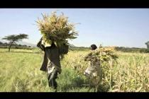 Ethiopia climate hearing: Taking action against climate change