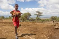 A boy carries a kid in Birhanu Weldu, Ethiopia