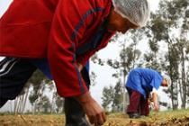 Agricultores en Sudáfrica. Foto: Matthew Willman/OxfamAUS