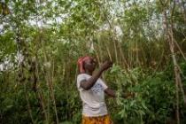 Aminata Jalloh, 26, Cash Grant Farmer- Katumbo (near Kabala Town). Photo: Tommy Trenchard/Oxfam
