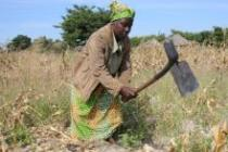 Nalukui is a farmer in Zambia. She harvested only 10kg of maize this year due to drought. Photo: Misozi Tembo
