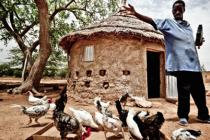 A man feeds hens, in Burkina Faso. Photo: Pablo Tosco/Oxfam