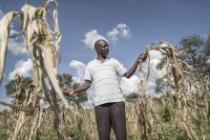 Jeffrey Tubi (49) strolling through his yellowed corn field. Photo: Sven Torfinn/Oxfam Novib