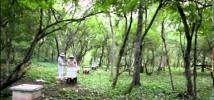 Bolivia: guardianas y guardianes del bosque