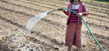 A woman waters her crops in Nanga, Laos
