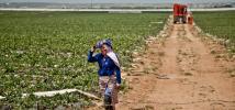 Une femme marche dans un champ de fraises