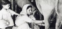 Woman milking a cow near Gujarat, India, in 1946. Credit: Oxfam