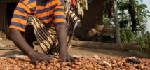 Photo: Maria Daniel, a female cocoa farmer in Nigeria. George Osodi/Panos