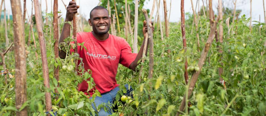 A field officer poses with his tomato crop in Teouma village, Vanuatu