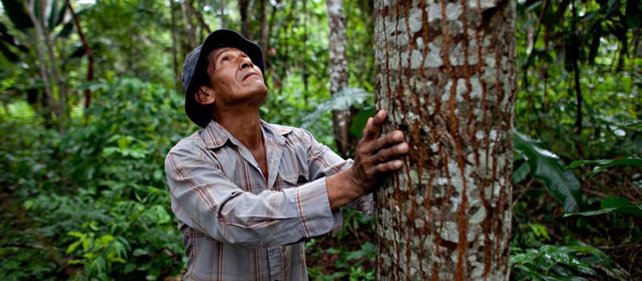 Manuel es productor agroforestal y productor de cacao. Gestiona una parcela de 3 hectáreas con más de 56 especies distintas en Riberalta, Beni (Bolivia).  Foto: Oxfam / Patricio Crooker