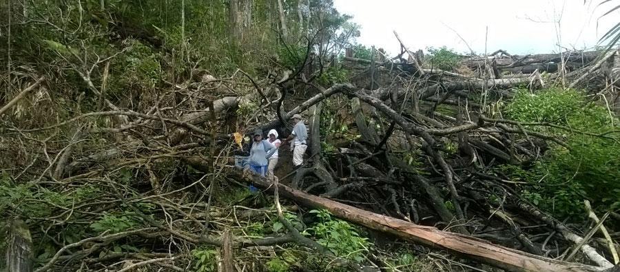 En Perú, más de 150 mil hectáreas de bosques primarios están en peligro ante el aumento de plantaciones de palma aceitera. Foto: AIDESEP