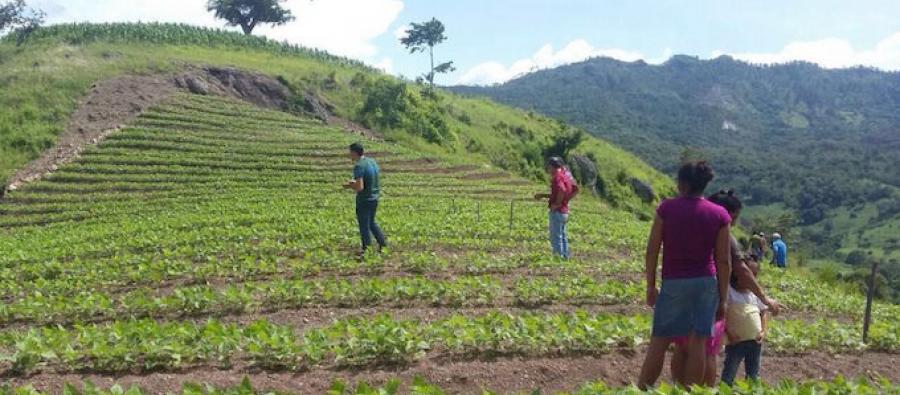 Parcelas comunitarias de cultivo en Honduras. Foto: OCDIH
