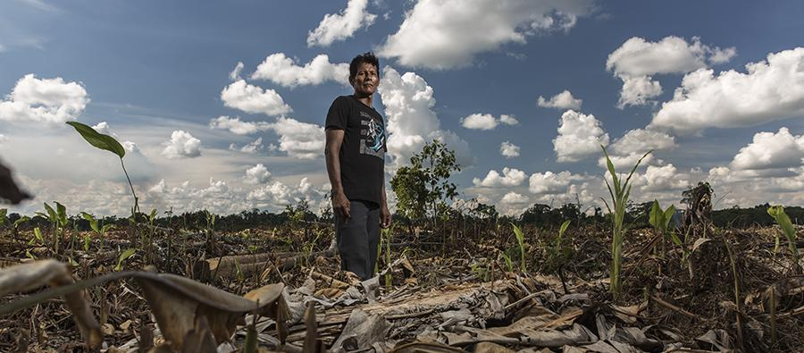 The indigenous Shipibo community of Santa Clara de Uchunya, in the Peruvian Amazon, is facing invasion of its ancestral lands by corporate oil palm plantations and land traffickers. 7,000 hectares of forest have been destroyed. Photo : Diego Pérez/Oxfam