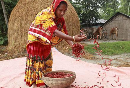 bangladeshpp