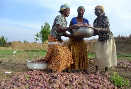 Anamshakia and friends showing harvest of their dry season gardening in Biambong, Ghana